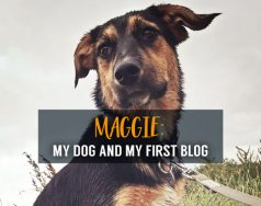 Maggie: my dog and my first blog featured image removed